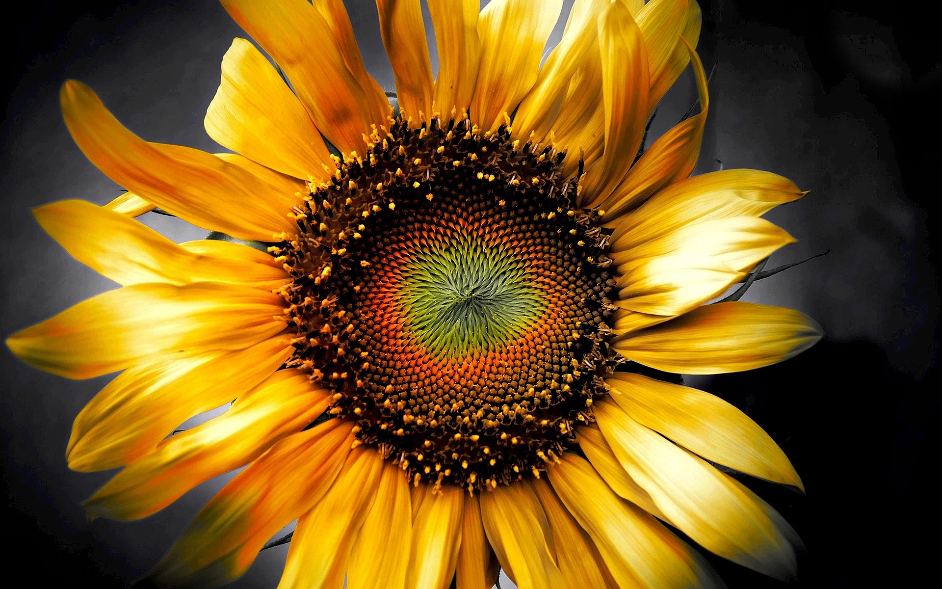Sunflower-art-3d